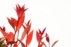 CloseupChristina leaf Royaltyfri Bild