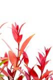 CloseupChristina leaf Fotografering för Bildbyråer