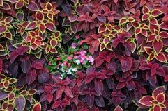 Closeupdesign av jordbeläggningväxter Royaltyfri Foto