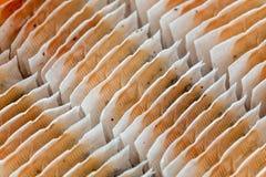 Closeupdetalj - teabagsrader som ordnas i ask arkivfoto