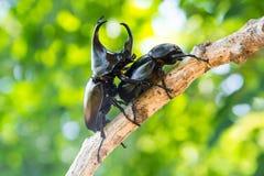 Closeupekoxe på träd Fotografering för Bildbyråer