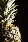 Closeupen av ananas på en svartbakgrund skiner på en sida royaltyfria bilder