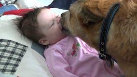 Closeupen av att kyssa för hund behandla som ett barn arkivfilmer