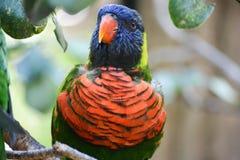 Closeupen av blått vände mot fågeln Arkivbilder