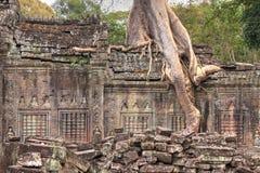 Closeupen av den förstörda väggen av en forntida en khmertempel med trädet växer arkivfoton