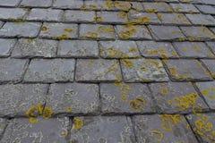 Closeupen av den gula och gråa laven på åldrigt kritiserar taktegelplattor Arkivfoto