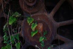 Closeupen av det gamla rörliga hjulet med getingar bygga bo och lövverktillväxt royaltyfri foto