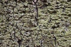 """Closeupen av en brun †för trädskäll """"kan användas som en bakgrund arkivfoto"""