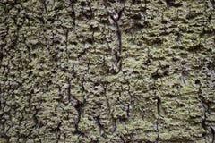 """Closeupen av en brun †för trädskäll """"kan användas som en bakgrund arkivbild"""