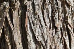 """Closeupen av en brun †för trädskäll """"kan användas som en bakgrund arkivfoton"""