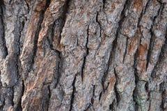 """Closeupen av en brun †för trädskäll """"kan användas som en bakgrund fotografering för bildbyråer"""