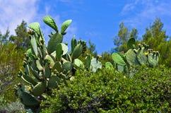 Closeupen av en grön kaktus med en liten guling blommar Royaltyfri Fotografi
