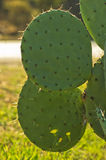 Closeupen av en grön kaktus med en liten guling blommar bakom Royaltyfri Bild