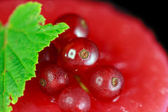 Closeupen av en redcurrantkaka dekorerade med bär Fotografering för Bildbyråer