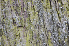 Closeupen av gammala wood plankor texture bakgrund Arkivfoto