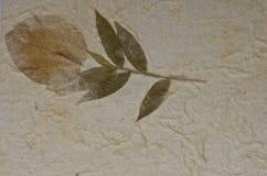 Closeupen av handgjort pappers- texturerar bakgrund med leafen Fotografering för Bildbyråer