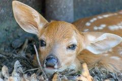 Closeupen av nyfött behandla som ett barn lismar Fotografering för Bildbyråer