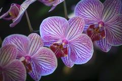 Closeupen av orkidér blommar i trädgård Arkivfoto