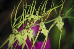 Closeupen av orkidér blommar i trädgård Arkivbilder