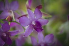 Closeupen av orkidér blommar i trädgård Royaltyfri Bild