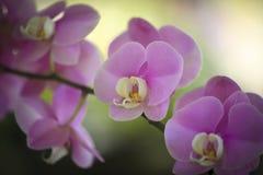 Closeupen av orkidér blommar i trädgård Royaltyfria Bilder