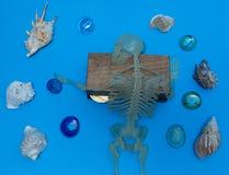 Closeupen av piratkopierar kramskattbröstkorgen royaltyfria foton