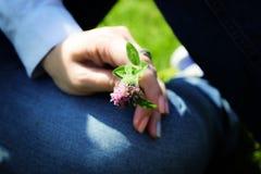 Closeupen av ` s för den unga kvinnan räcker hållande lösa blommor Växt av släktet Trifolium i händer Arkivbilder