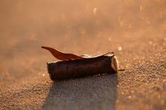 Closeupen av solnedgångstrandsand med bladet och trä klibbar Fotografering för Bildbyråer