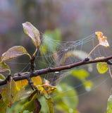 Closeupen av spindeln förtjänar på ett träd Arkivfoto