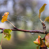 Closeupen av spindeln förtjänar på ett träd Royaltyfri Foto