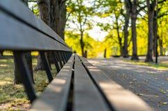 Closeupen av tomt parkerar bänkar i Sunny Autumn Day With Golden Leaves i träd, Lettland, Europa, begrepp av att koppla av loppda royaltyfria foton