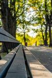 Closeupen av tomt parkerar bänkar i Sunny Autumn Day With Golden Leaves i träd, Lettland, Europa, begrepp av att koppla av loppda royaltyfri fotografi