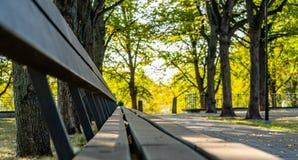 Closeupen av tomt parkerar bänkar i Sunny Autumn Day With Golden Leaves i träd, Lettland, Europa, begrepp av att koppla av loppda royaltyfri foto