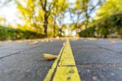 Closeupen av trottoar i parkerar i Sunny Autumn Day With Golden Leaves i träd, Lettland, Europa, begrepp av den avslappnande lopp arkivbilder