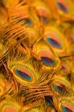 closeupen befjädrar påfågeln Royaltyfria Bilder