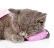 Closeupen behandla som ett barn kattungen som sover på kudden På vitbakgrund Royaltyfri Bild