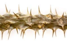 Kröna av taggar Arkivbild