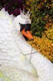 Closeupen den vita svanQueens uppfanns av blommor. Arkivbilder