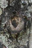 Closeupen gnarl av träd Arkivbild