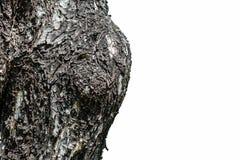 Closeupen knäckte hud av stammen av trädtextur på vit bakgrund Royaltyfri Fotografi