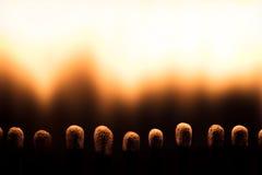 Closeupen matchsticks bränner, avfyrar och flammor Royaltyfria Foton