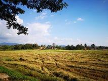 Closeupen skördade risfältfältet i Penampang, Sabah royaltyfri foto