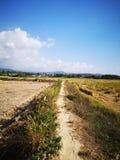 Closeupen skördade risfältfältet i Penampang, Sabah arkivbild