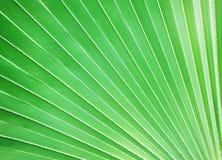 Gömma i handflatan leafen, bakgrund Arkivfoton