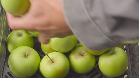 Closeupen specificerar spjällådan med det gröna äpplet i trädgården skörd i fruktträdgård i sommarsäsong frukt-odlare händer som  stock video
