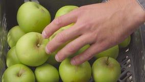 Closeupen specificerar spjällådan med det gröna äpplet i trädgården skörd i fruktträdgård i sommarsäsong frukt-odlare händer som  lager videofilmer