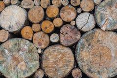Closeupen till den stora och lilla rundan formade journalen av gammalt trä Gnarl bakgrund Arkivfoto