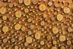Closeupen till den stora och lilla rundan som formas av trä, Gnarl bakgrund Royaltyfri Fotografi