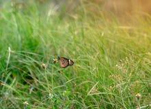 Closeupfjäril på blomma arkivbilder