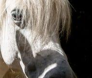 Closeupfors av huvudet för häst` s royaltyfria foton